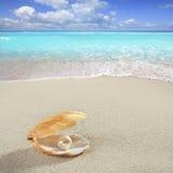 Caribbean pearl on shell white sand beach tropical. Caribbean pearl inside clam shell over white sand beach Stock Images