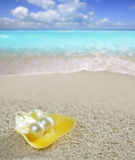 Caribbean pearl on shell white sand beach tropical Royalty Free Stock Photography