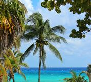 Caribbean in playa del Carmen Stock Photography