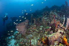 Caribbean Reef Scene with Divers Stock Images