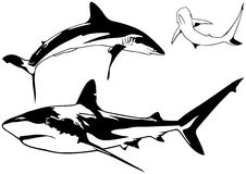 Caribbean Reef Shark Set. Black Illustration, Vector Royalty Free Stock Photo