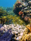 Caribbean reefscape Stock Photography