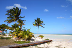 Caribbean resort. Cuba - Caribbean beach Cayo Guillermo. Sandy coast and coconut palm trees. Jardines del Rey region Stock Photography