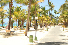 Caribbean resort beach. Dominican tropical resort with chairs on beach Stock Photos