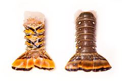 Caribbean rock lobster tails on a white background. Raw Caribbean ( Bahamas ) rock lobster (Panuliirus argus) or spiny lobster tails isolated on a white studio Royalty Free Stock Image