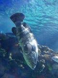 caribbean ryba Zdjęcia Stock