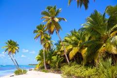 Caribbean sand beach. Tropical beach with palm trees in Saona Island, Caribbean Sea, Dominican Republic Stock Photos