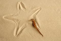 Caribbean sand seahorse over starfish footprint Royalty Free Stock Photos