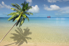 Caribbean sea. And coconut palm royalty free stock photo