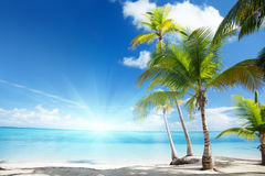 Caribbean Sea And Palms Stock Images