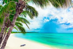 Paradise resort beach palm tree sea Dominican Republic. Caribbean Sea coast white sand resort beach palm tree Dominican Republic Royalty Free Stock Photography