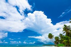 Resort beach palm tree sea Royalty Free Stock Images
