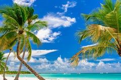 Resort beach palm tree sea. Caribbean Sea coast white sand resort beach palm tree Dominican Republic Royalty Free Stock Photo