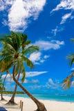 Resort beach palm tree sea. Caribbean Sea coast white sand resort beach palm tree Dominican Republic Royalty Free Stock Photography