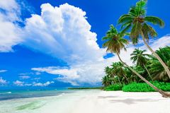 Resort beach palm tree sea. Caribbean Sea coast white sand resort beach palm tree Dominican Republic Royalty Free Stock Image
