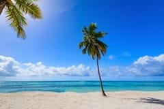 Resort beach palm tree sea. Caribbean Sea coast white sand resort beach palm tree Dominican Republic Stock Images