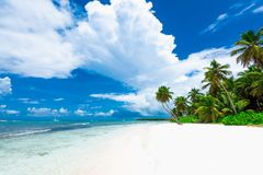 Resort beach palm tree sea. Caribbean Sea coast white sand resort beach palm tree Dominican Republic Stock Image