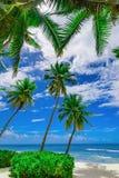 Resort beach palm tree sea. Caribbean Sea coast white sand resort beach palm tree Dominican Republic Royalty Free Stock Photos
