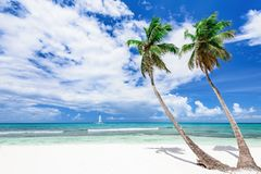 Resort beach palm tree sea Dominican Republic. Caribbean Sea coast white sand resort beach palm tree Dominican Republic Royalty Free Stock Photo