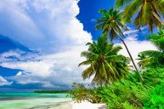 Resort beach palm tree sea Dominican Republic. Caribbean Sea coast white sand resort beach palm tree Dominican Republic Royalty Free Stock Photos