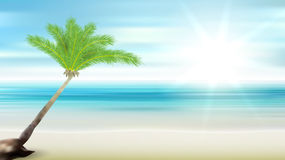 Caribbean sea and coconut palm. Beach palm tree and sea eps10 vector Stock Photos