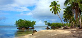 Caribbean sea and green palm trees. Stock Image