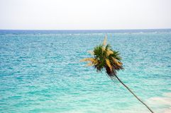 Caribbean Sea in Mexico Royalty Free Stock Photography