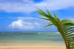 Caribbean sea and palm leaves background. Stock Image