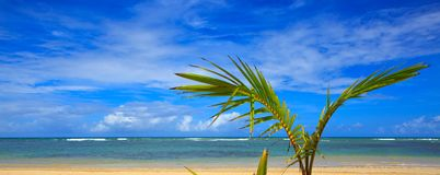 Caribbean sea and palm leaves background. Royalty Free Stock Images