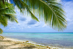 Caribbean sea and palm leaves. Stock Photo