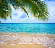 Caribbean sea and palm leaves. Stock Image