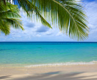 Caribbean sea and palm leaves. Royalty Free Stock Image