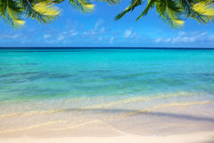 Caribbean sea and palm leaves. Royalty Free Stock Photos