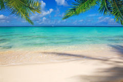Caribbean sea and palm leaves. Stock Photos