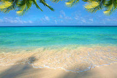 Caribbean sea and palm leaves. Royalty Free Stock Images