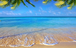 Caribbean sea and palm leaves. Royalty Free Stock Photography