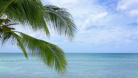 Caribbean sea and palm leaves. stock footage