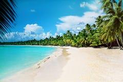 Caribbean sea. Palm trees on the beach in Caribbean sea Stock Photos