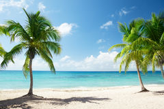 Caribbean sea and palms Stock Photo