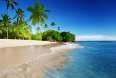 Caribbean sea and palms Royalty Free Stock Photo