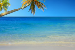 Caribbean sea and palms. Stock Image