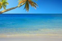 Caribbean sea and palms. Stock Image