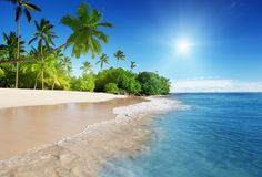Caribbean sea and palms Royalty Free Stock Photography