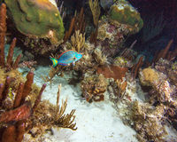 Caribbean sea reef during night dive Stock Photography