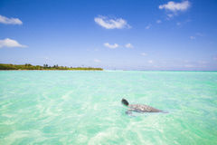 Caribbean Sea scenery with turtle stock photo