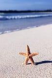 Caribbean sea star Stock Photography