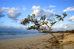 Caribbean sea with a tree Royalty Free Stock Photography