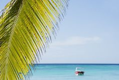 Caribbean sea with turquoise water and palms close to Saona island Stock Images
