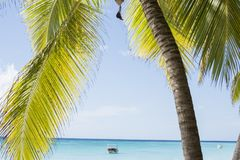 Caribbean sea with turquoise water and palms close to Saona island Royalty Free Stock Photos