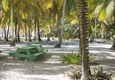 Caribbean sea with turquoise water and palms close to Saona island Royalty Free Stock Images